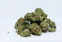 unpacked marijuana