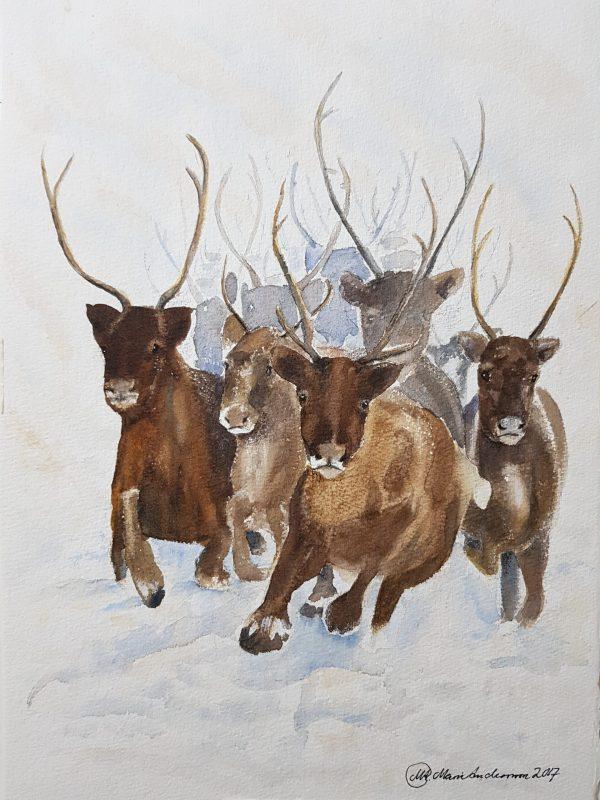 Renar, Reindeers
