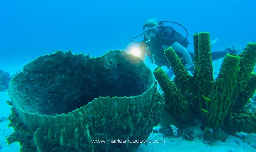 Guadeloupe, en plongée dans la réserve marine Cousteau © F Le Guen