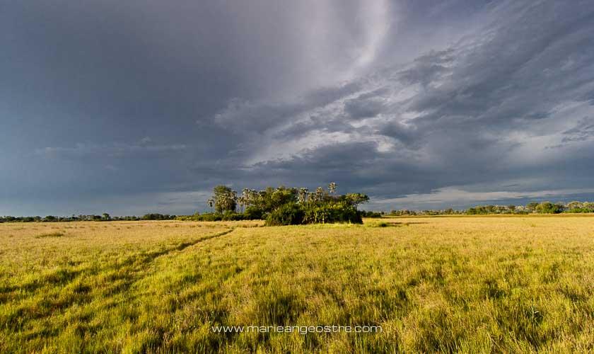 Botswana, ciel d'orage sur la savane du delta de l'Okavango © Marie-Ange Ostré