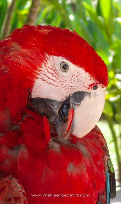 Bali, perroquet © Marie-Ange Ostré