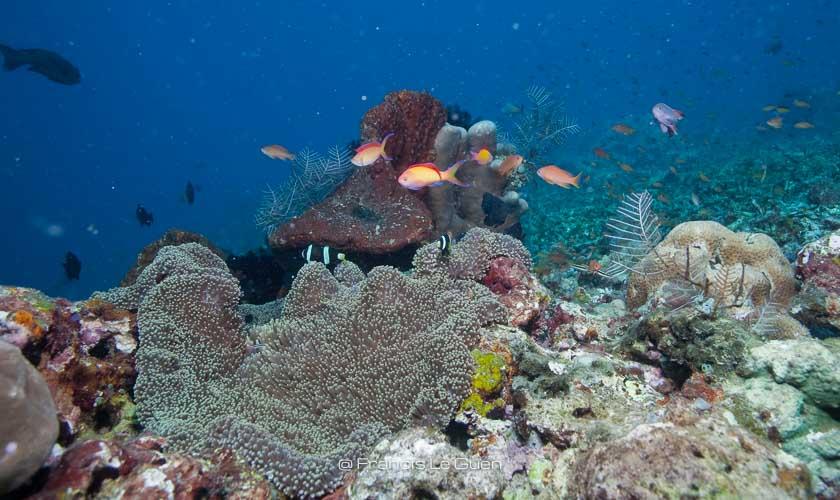plongée Bali