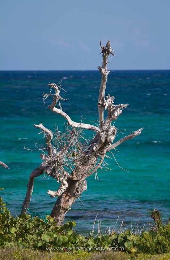 Saint-Martin, végétation de l'îlet Pinel © Marie-Ange Ostré