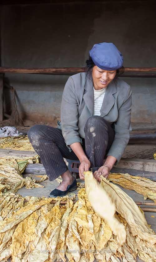 Chine, travail des feuilles de tabac, Yunnan © Marie-Ange Ostré