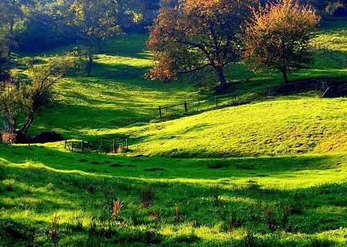 Summer Meadow, Heidelberg, Germany