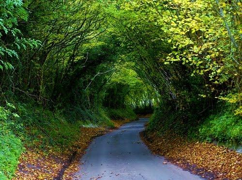 Hobbit Highway, Chiltern, England
