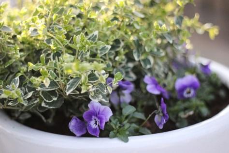 Urna med blommor