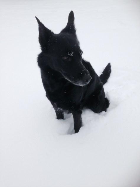 Vinter_zelda