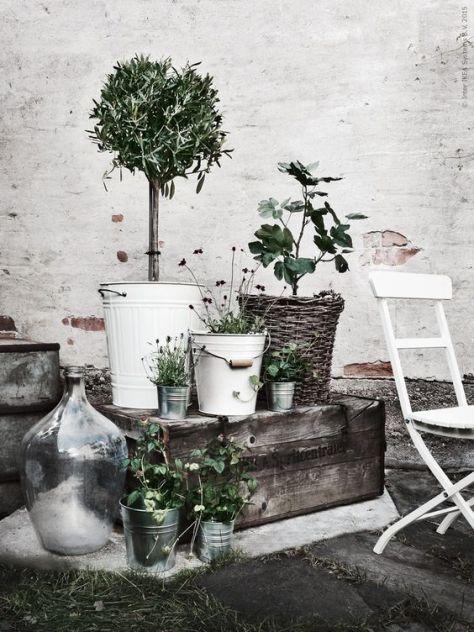 växter-ikea-livethemma