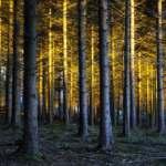 forêt magique de lumière