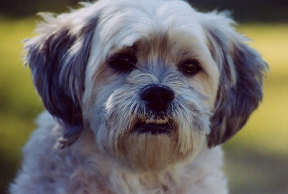 jensen-the-dog-1477567