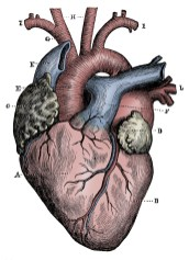 Heart illustration, muted colors