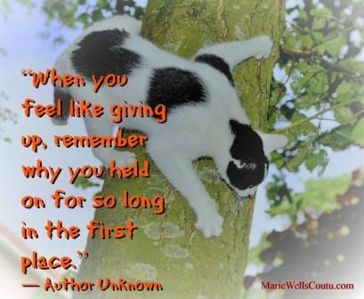 climbing, holding on, trust, cat, pursuing goals