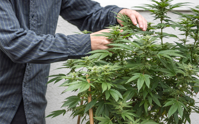 changes-are-coming-to-oregons-cannabis-industry