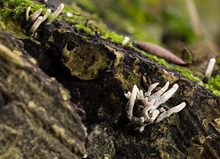 fungi-5