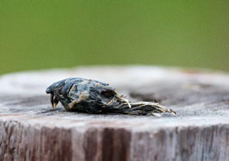 owl-pellet