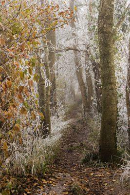 Path to Hambledon Hill