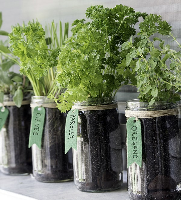 Grow Your Edible Garden At Home Mbsathome
