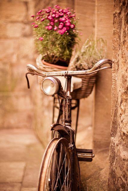 laminas bicicletas (11)