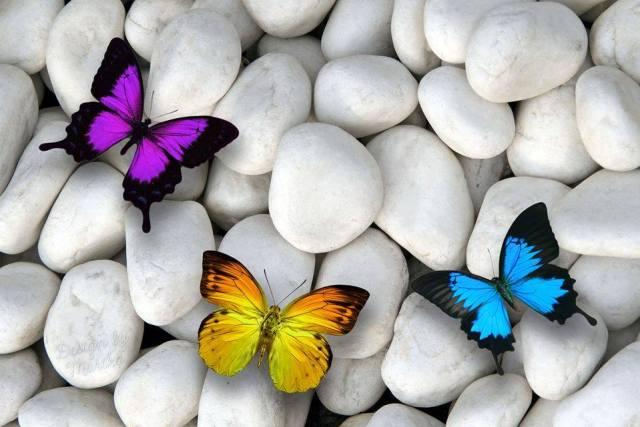 mariposas-decoupage-3