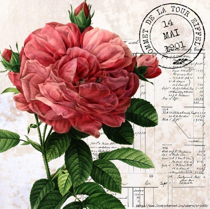 laminas-flores-decoupage-2