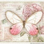 Lámina-mariposas-2