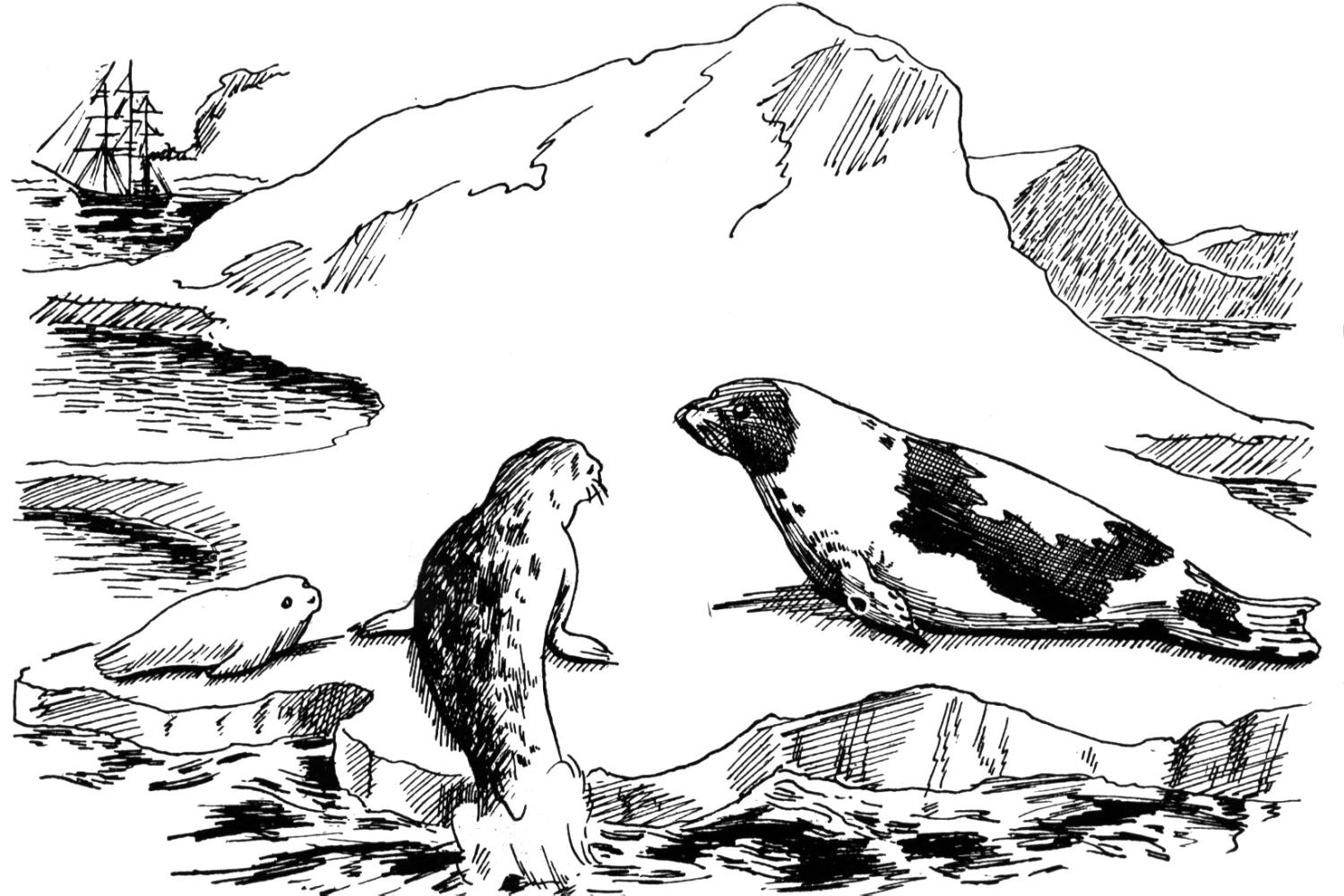 baby seal coloring pages on marine seal coloring pages