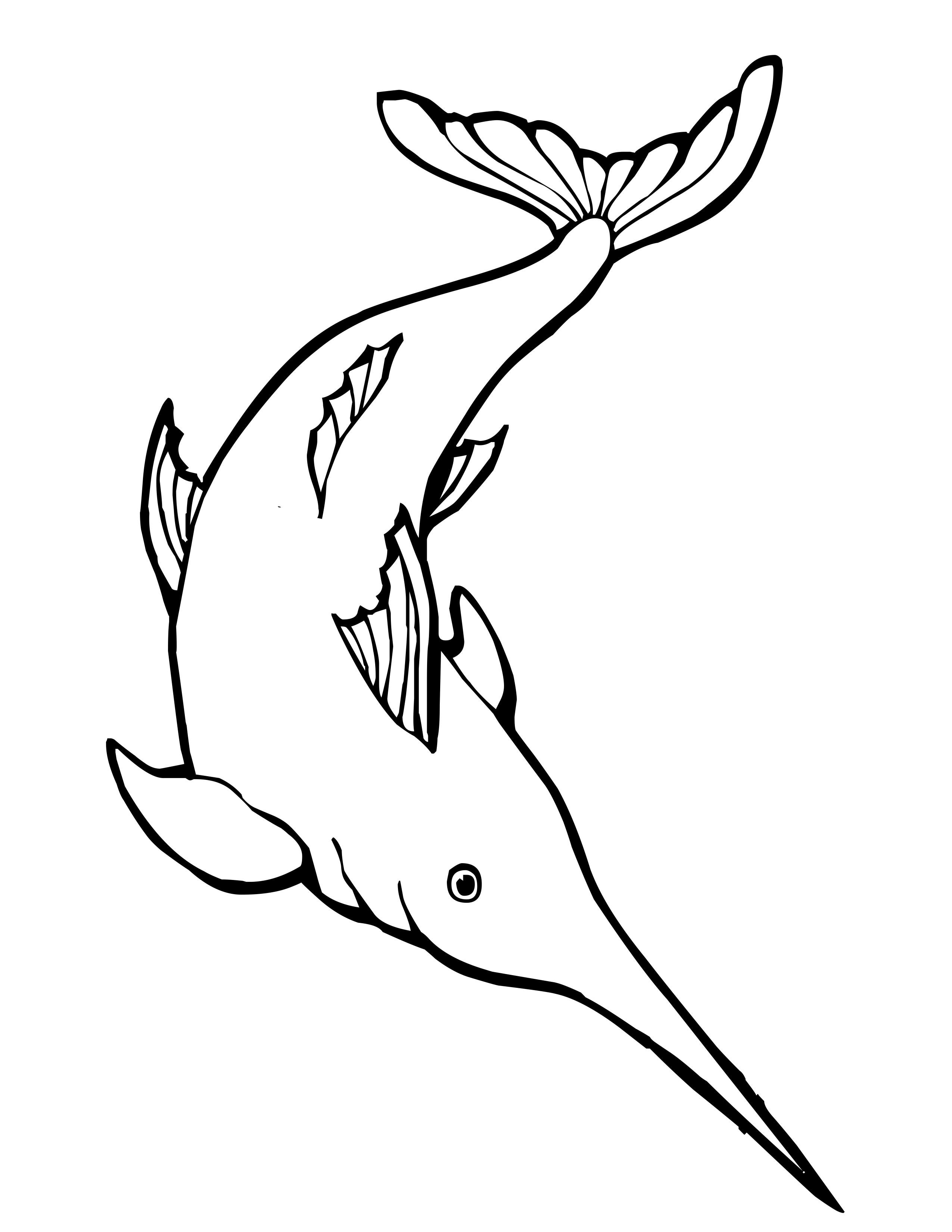pics photos swordfish coloring page