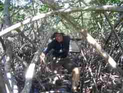 Helen in the mangroves