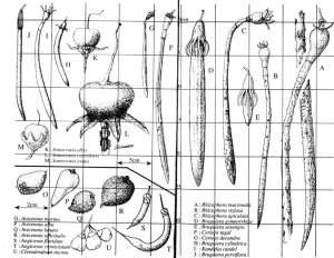 Mangrove root ID