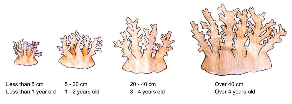 Coral Regrowth in Fiji