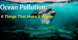 Cause and Effects of Ocean Dumping