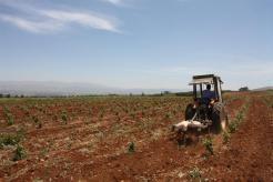Photo of some vineyards in Lebanon