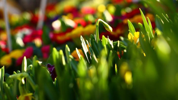 Fleurs en couleurs