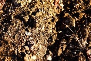 terre sur sol argilo-calcaire
