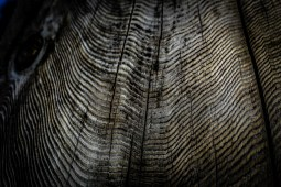 Photo of a wooden trunk