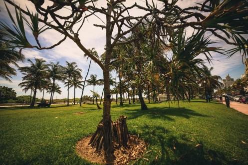trees in Lummus Park, Miami, Florida
