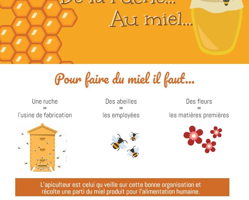 Infographie : de la ruche au miel