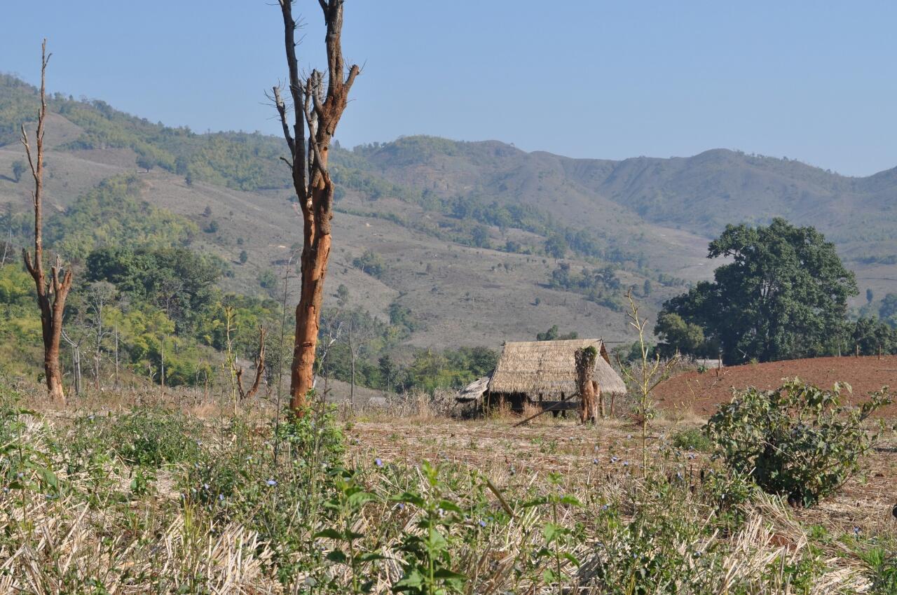 Trek au départ de Hsipaw : à la découverte de villages Shan et Palaung
