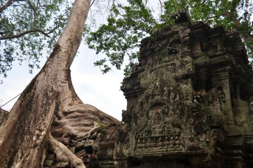 Angkor Ta Prohm 3