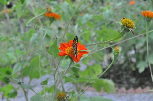 Kep papillons 2