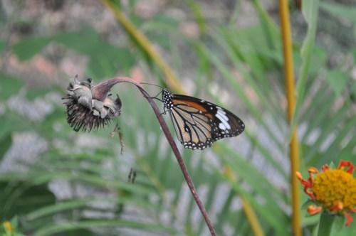 Kep papillons