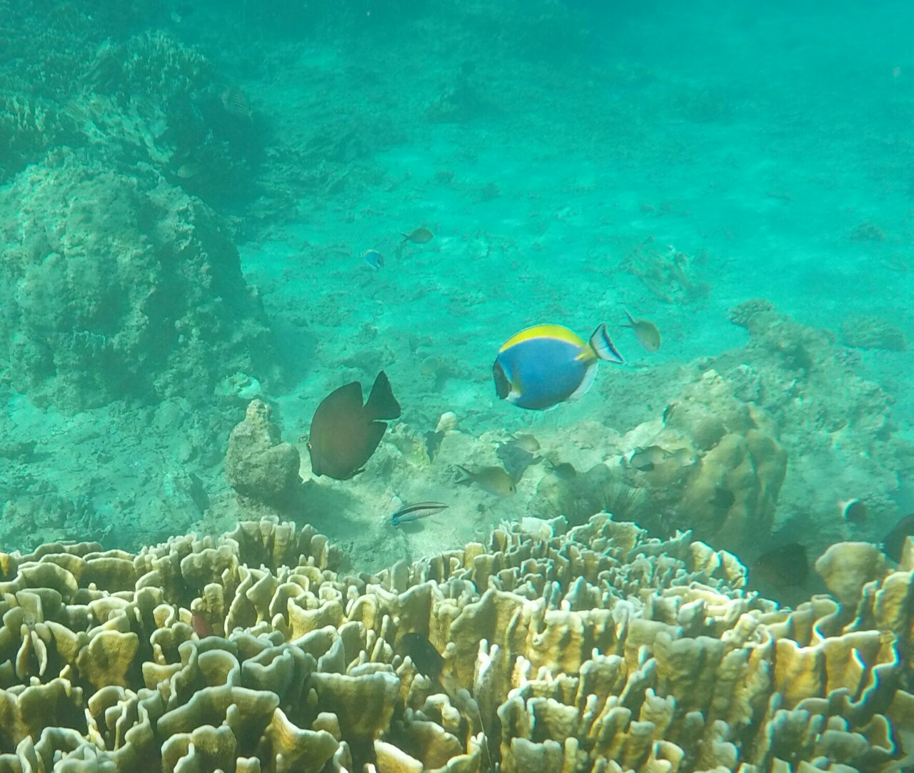 Pulau Weh, le paradis du snorkeling à Sumatra