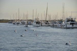 Marina Hervey Bay 0809