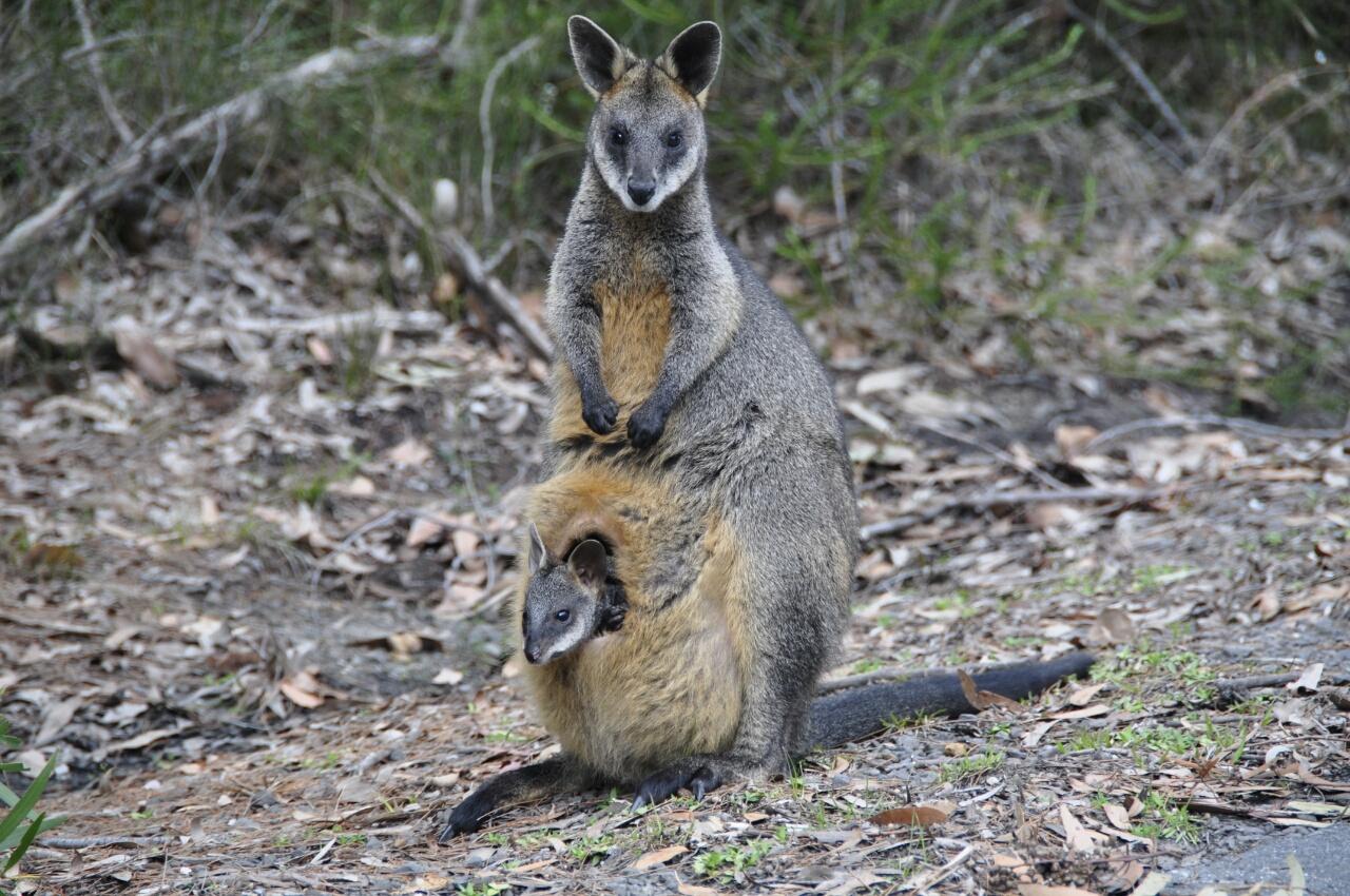 Australie : le bilan c'est maintenant !