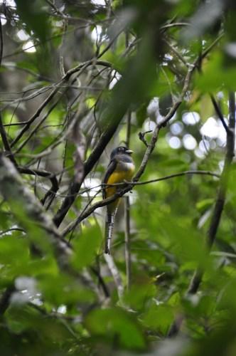 Corcovado_oiseaux-2