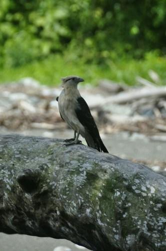 Corcovado_oiseaux