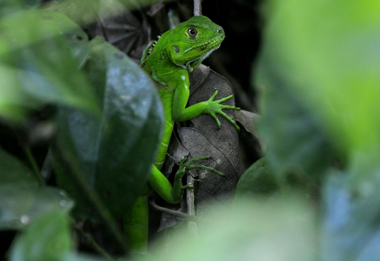 Costa Rica : le bilan c'est maintenant !