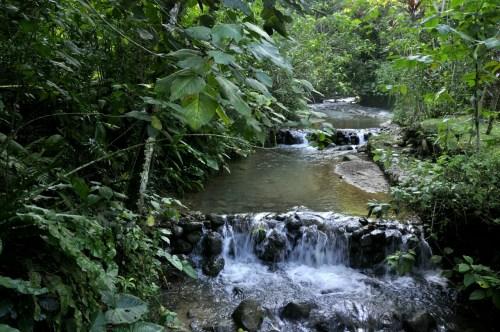 Lac de Yojoa - plantation cafe 3