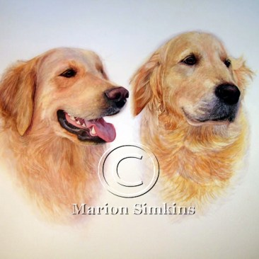 Watercolour head and shoulder painting of two Golden Retriever's, one panting with mouth open and tongue hanging out